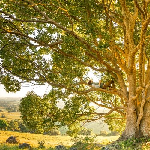 tree services north shore